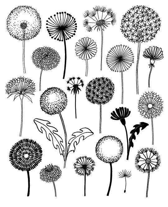 20 modeles de dessin tatouage fleurs de pissenlit