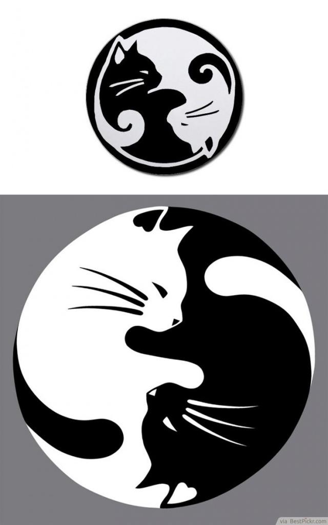 dessin tatouage chat blanc et noir femme forme yin et yang tatouage femme. Black Bedroom Furniture Sets. Home Design Ideas